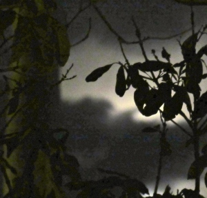 The moon considers appearing. (My photo)