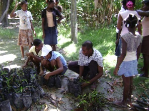 The Bas Limbe and Diotin project funded by CEPF is designed to help local Haitian stakeholders understand and manage the negative effects of inappropriate environmental activities on biodiversity as well as their socio-economic well-being.