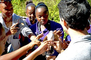 Jamaican schoolchildren getting an up-close look at a Caribbean Dove. (Photo by Lisa Sorenson)