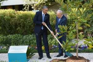 The planting of a tree is highly symbolic. It's for the future. In this photograph, US President Barack Obama takes part in a tree planting ceremony at the residence of Israeli President Shimon Peres), in Jerusalem, Israel, on 20 March 2013. This was a magnolia tree that President Obama had brought from the White House garden. During the ceremony, President Peres told the story of the Carob Tree, planted for generations to come. EPA/AMOS BEN GERSHOM / GPO