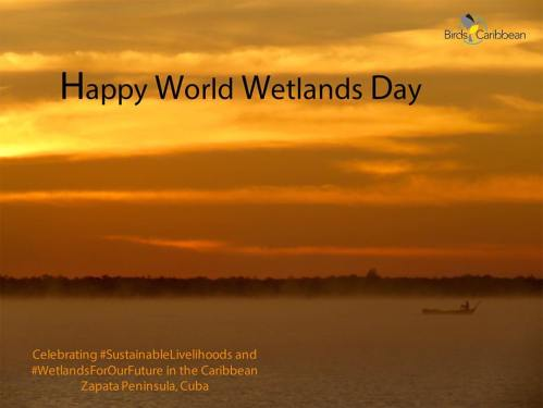 World Wetlands Day from BirdsCaribbean.