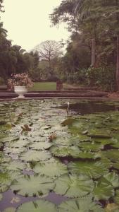 My favorite corner of Hope Gardens has always been the sunken garden. (My photo)