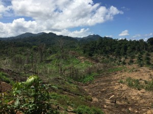 Deforestation in Malaysian Borneo is believed to be a driver of malaria transmission in humans, according to new research. (Image credit: Kimberly Fornace)