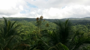 The thick rainforest of the John Crow Mountains in Portland, from Ecclesdown Road. (My photo)