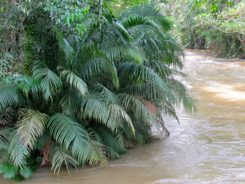 The Martha Brae River in Cockpit Country, Trelawny, after a rainy period. October, 2015. (My photo)