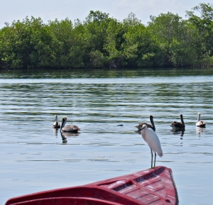 Birds, fishing boat and mangroves at Old Harbour Bay. (My photo)
