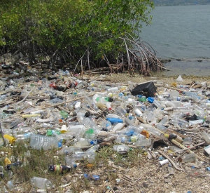 Our 2014 tour of Kingston Harbour ended with a visit to a piece of land apparently owned by the Airports Authority of Jamaica, behind Norman Manley International Airport, where yards and yards of plastic and other garbage lined the waterside. What is worse, we were choking because of the (illegal) burning of garbage on the site. (My photo)