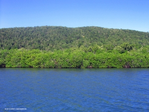 The pristine mangroves and dry limestone forest at Great Goat Island. (Photo: Kirsty Swinnerton/savegoatislands.org)