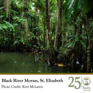 """The first in JET's anniversary series of """"25 Places and Projects"""" is the Black River Morass. JET notes: """"The Black River Lower Morass Ramsar site was declared protected in 1997. Several fish kills have occurred in the area in the past as a result of improper waste disposal from industrial facilities. JET continues to advocate for improved water quality and standards at this and other sites."""" (Photo: Kurt McLaren)"""