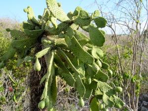 A remarkable cactus plant.