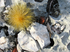 The flora - all kinds of cacti, large and small - is unique to dry limestone habitat.