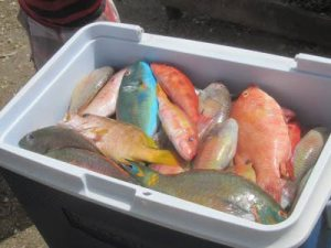 Parrotfish on sale in a St. Catherine fish market.
