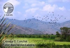 The wetlands area of La Cienaga Conchal in Colombia.