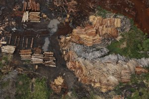 Sawmills that process illegally logged trees from the Amazon rainforest are seen near Rio Pardo, in the district of Porto Velho, Rondonia State, Brazil, September 3, 2015. The town of Rio Pardo, a settlement of about 4,000 people in the Amazon rainforest, rises where only jungle stood less than a quarter of a century ago. Loggers first cleared the forest followed by ranchers and farmers, then small merchants and prospectors. Brazil's government has stated a goal of eliminating illegal deforestation, but enforcing the law in remote corners like Rio Pardo is far from easy. REUTERS/Nacho Doce