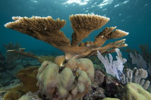 Ocean health = ocean wealth (including such economic activities as dive tourism). This is healthy coral in the Dominican Republic's Parque Nacional del Este. (Photo: The Nature Conservancy)