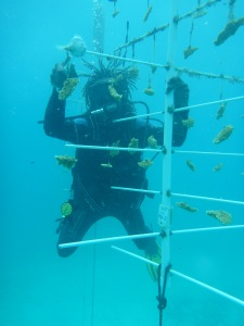 Other coral nurseries are being established around the island. (Photo: C-FISH)