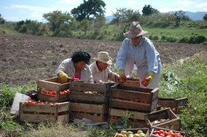 Sustainable, bountiful harvest on Sarduy Farm, Cienfuegos Watershed, Cuba. (Photo: UNEP-CEP)