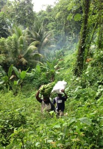 """Farmers coming from """"ground"""" in Portland, eastern Jamaica. (Photo: Yale School of Forestry & Environmental Studies)"""