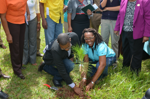 Minister of State in the Ministry of Education, Youth and Information, Hon. Floyd Green, (left stooping) is assisted by Annmarie Bromfield in the planting of a Caribbean Pine Tree during activities to celebrate National Tree Planting day at Munro College in St. Elizabeth, on Friday, October 7. The annual exercise, which is spearheaded by the Forestry Department, aims to highlight the role of trees in the sustenance of life. This year's National Tree Planting Day was celebrated under the theme 'Trees Today, Trees Tomorrow, Trees for Life'. (Photo: JIS)