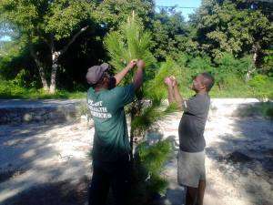 Getting ready for a Caicos Pine Christmas tree lighting at Kew Corner in North Caicos. (Photo: Facebook)
