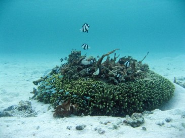 A single coral head, inside a protected area in the USA, provides essential habitat for many species. (Photo: UNEP)