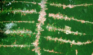 Deforestation along roads in the Brazilian Amazon. (Google Earth)