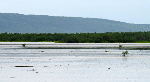 A view across the salt marsh from Portland Cottage, Clarendon. (My photo)