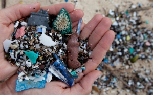 "Plastic debris comes in all shapes and sizes, but those that are less than five millimeters in length are called ""microplastics."" They come from a variety of sources, including from larger plastic debris that degrades into smaller and smaller pieces. In addition, microbeads, a type of microplastic, are very tiny pieces of manufactured polyethylene plastic that are added as exfoliants to health and beauty products, such as some cleansers and toothpastes. These tiny pieces are entering the marine ecosystem, being ingested by fish and other creatures."