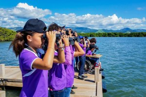 Students from the Jose Horacio Cora School, Arroyo, Puerto Rico, were delighted to learn how to use binoculars to spot feeding terns, gulls and Brown Pelicans in the waters at the Jobos Bay National Estuarine Research Reserve. (Photo by Ernesto Olivares)