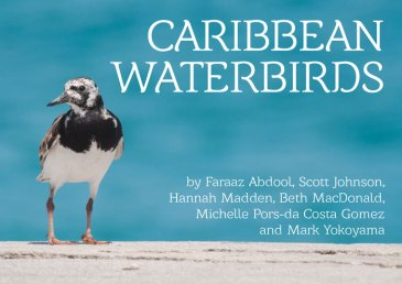 Caribbean Waterbirds is a free ebook available for download at BirdsCaribbean.org.