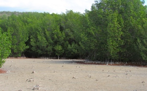 The large expanse of dried-up lagoon at the end of the boardwalk. (My photo)
