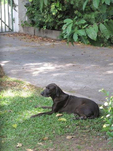 Girlie, on guard.