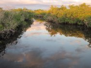 Mangroves in the Everglades of Florida are worth billions in the fight against climate change.