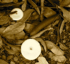 It had been raining, and I took this photo in my yard, in sepia. An earthy look, right?