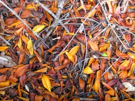 Leaves create a variety of textures. These are fallen mangrove leaves.