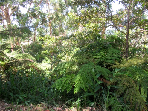 Layers of foliage in the beautiful forest: Holywell in the Blue Mountains.