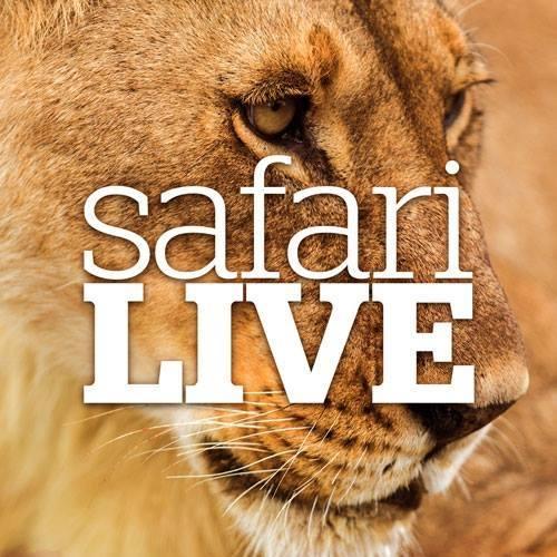 My Weekend Safari