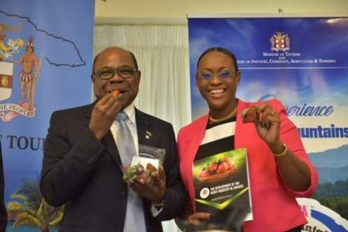 The ever chirpy Tourism Minister Ed Bartlett and Member of Parliament Juliet Holness sample some strawberries from Ms. Holness' constituency at the launch of the Blue Mountain Coffee Festival.