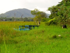 A boat, buried in the grasses surrounding a beautiful lake in Sri Lanka. The only sound: that of the water.