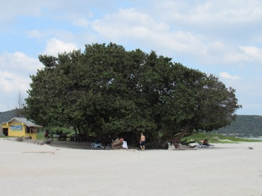 A little shade on Fort Clarence Beach.