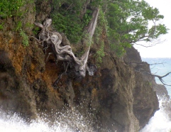 Dramatic rocks and tree roots in Frenchman's Cove, Portland. The weather was pretty dramatic, too!