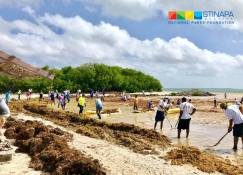 The residents of Bonaire are struggling with tons of sargassum seaweed. (Photo: Facebook)