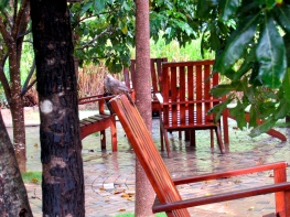 The lines of chairs in the rain, and tree trunks, at the Amaara Forest Hotel in Sigiriya, Sri Lanka.