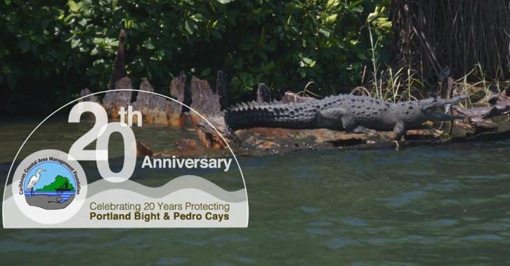 Happy 20th Anniversary to the Caribbean Coastal Area Management Foundation (C-CAM)! This crocodile looks familiar...