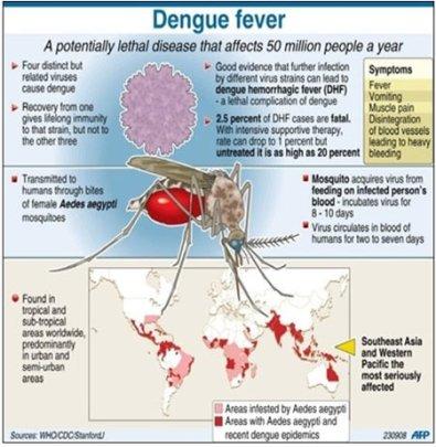 facts-dengue