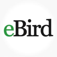 ebird-logo-300x300