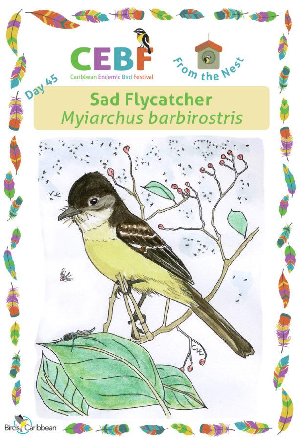 Day45_SadFlycatcher_WP-612x900