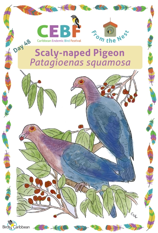 Day48_ScalynapedPigeon_WP