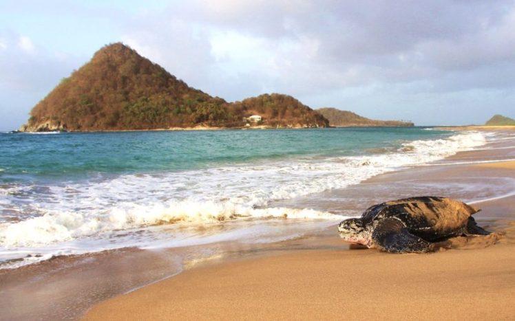 leatherback-sea-turtle-Levera-Kate-Charles-Ocean-Spirits-2-900x563
