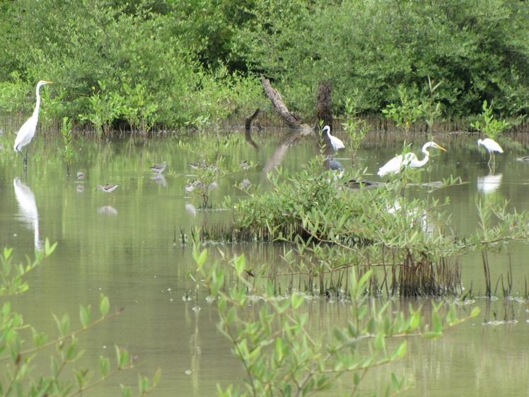 Mt-Hartman-West-Pond-shorebirds-and-waterbirds